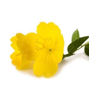 evening primrose for soft and supple skin used in serums by bao laboratory